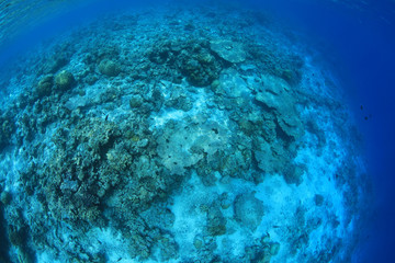 Fototapete - Coral reef damaged by the coral bleaching