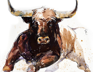Bull. animal illustration. Watercolor hand drawn series of cattle. Toro Bravo breeds.