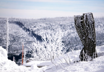 Frozen Tree Trunk in Winter Time at the Mountains