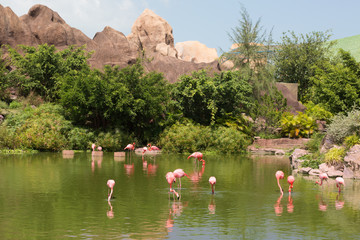 Foto op Canvas Flamingo Flock of pink beautiful flamingo standing in pond with reflection.