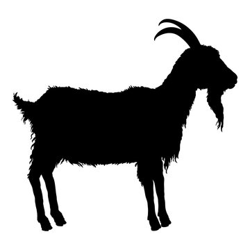 Vector Silhouette of Goat.
