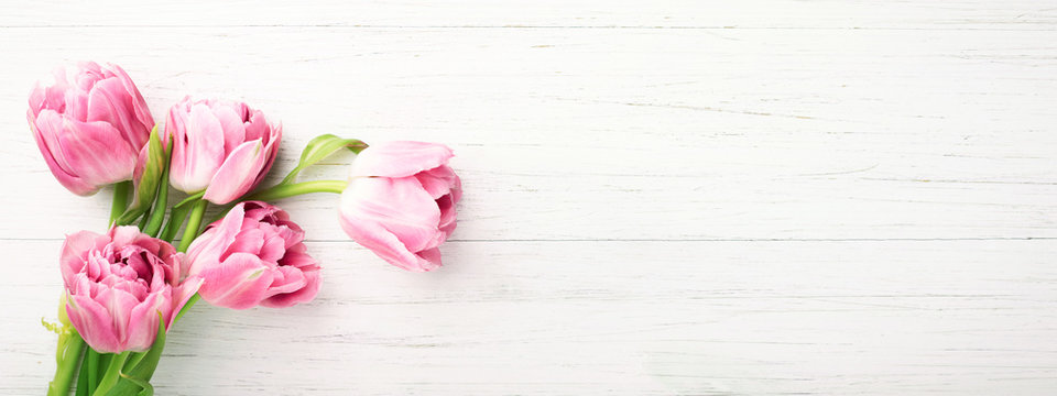 Bunch of pink tulips on white wooden background with copy space. Banner with spring flowers. Top view.