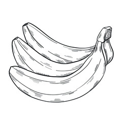 A bunch of banana in clip art style in isolate on a white background. Vector illustration.
