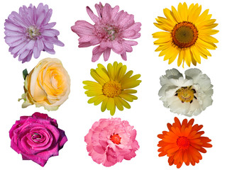 Different flowers isolated on white background.