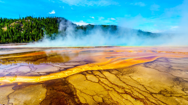 The colorful Bacterial Mats of the Grand Prismatic Spring in Yellowstone National Park, Wyoming, United Sates