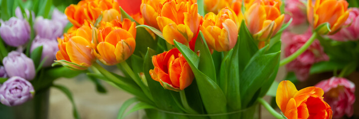 Fresh spring  colorful  tulip flowers banner. Lot of multicolored tulips bouquets.  Hello Spring...