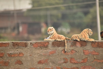 funny pic of two knitted tiger toys on the wall with the blur background.