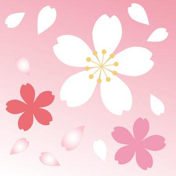 桜アイコン10
