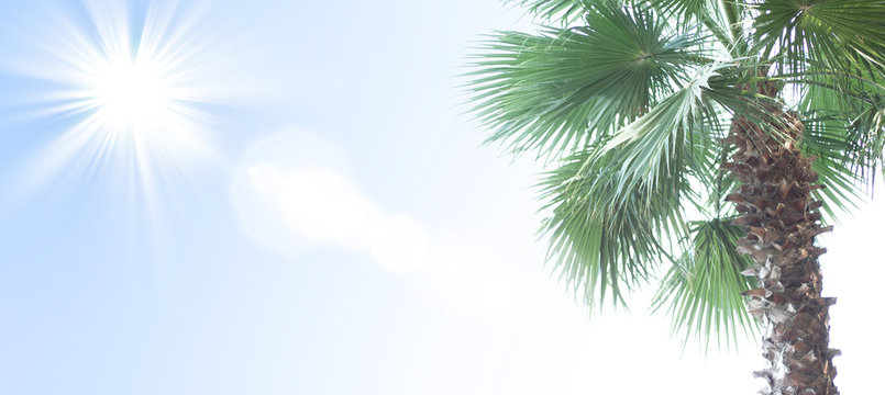 Blured summer background. Tropical sunny day. Banner with place for text