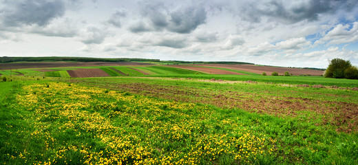 Wall Mural - spring panoramic shot with pieces of agricultural land and dandelion meadow