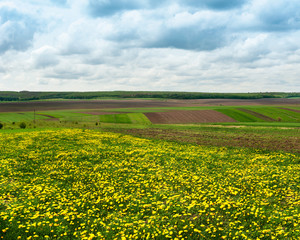 Fototapete - spring panoramic shot with pieces of agricultural land and dandelion meadow