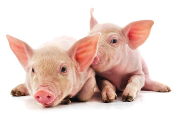 Two little pink pigs.