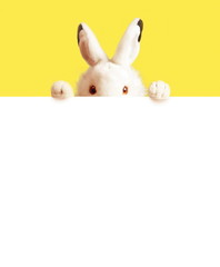 White easter rabbit with sheet for a text writing. Easter concept.