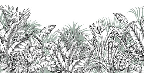 Seamless border with tropical palm, banana and monstera leaves.