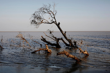 A tree is seen partially submerged in water after a riverbank collapsed in Ta Dar U village, Bago, Myanmar