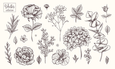 Vector collection of hand drawn flowers. Vintage Botanical Flowers. Hydrangea, rose, peony, eucalyptus and different leaves and flowers.