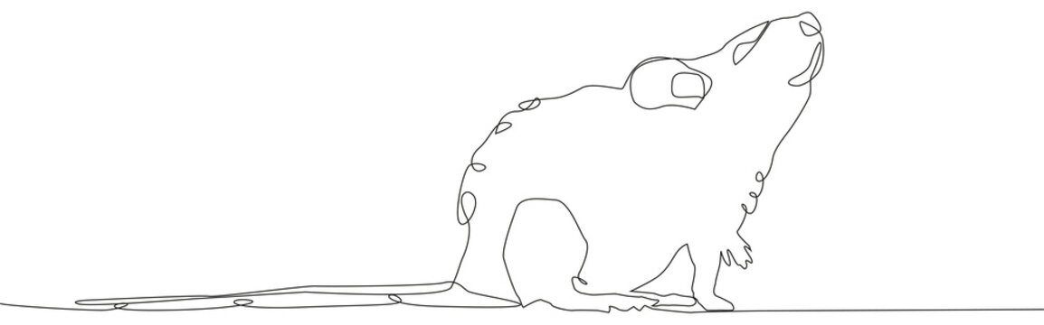 Rat mouse continuous line drawing. One hand drawn single lineart style.