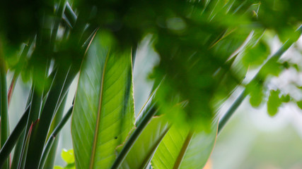 Canvas Prints Palm tree folhas de plantas