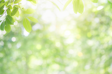 Beautiful nature view of green leaf on blurred greenery background in garden and sunlight with copy space using as background natural green plants landscape, ecology, fresh wallpaper concept. Fototapete