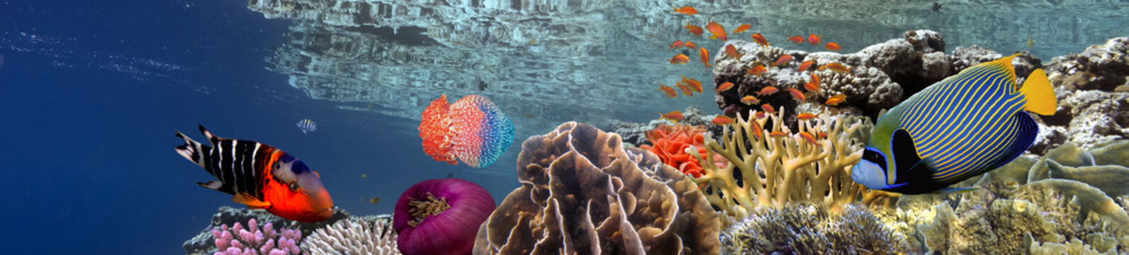 Coral reef underwater panorama with school of colorful tropical fish