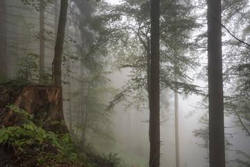Keuken foto achterwand Bos in mist Wald im Nebel