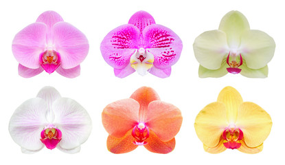 Wall Mural - Set collection of Beautiful phalaenopsis orchid flower isolated on white background