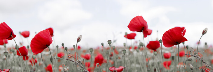 Foto op Canvas Poppy Wild poppy flowers on clouds sky background.