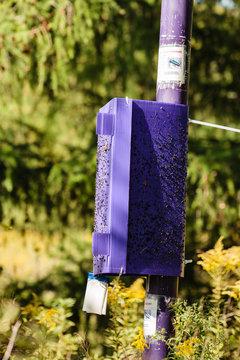 Purple Emerald Ash Borer Insect Trap