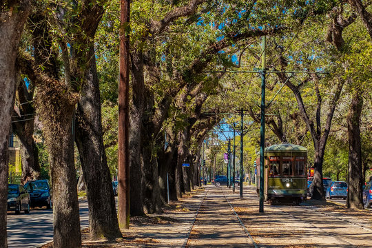New Orleans Street Car in the Live Oak Trees