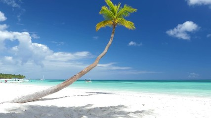 Fototapete - Coconut palm tree on white sandy beach on caribbean island. Travel destinations. Summer vacations