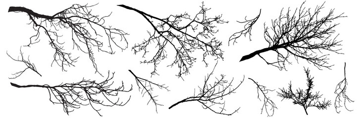 Autumn branches of trees, silhouettes of bare branches. Vector illustration.