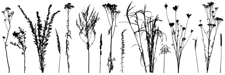 Set of wild plants and weeds, silhouettes. Vector illustration.