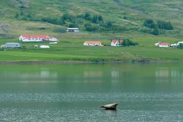 Spoed Foto op Canvas Olijf Green landscape of Iceland