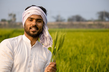 indian farmer showing healthy wheat barley in field