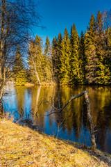 Powichrowane drzewa nad jeziorem w zimowy poranek, oszroniona trawa
