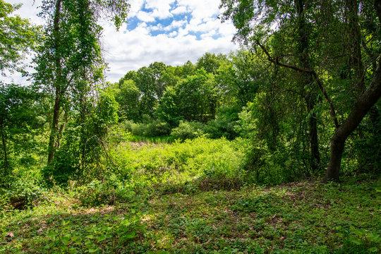 DSC_0637D3400 Meadow in spring - Arlington's Great Meadow