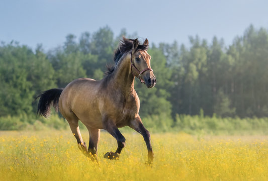 Andalusian horse galloping across blooming meadow.