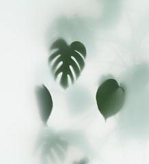 Wall Mural - monstera palm in fog