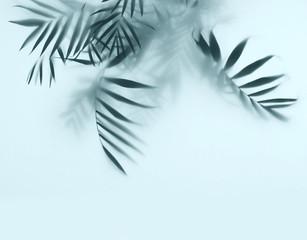 Wall Mural - palm in fog