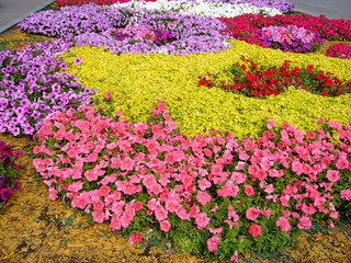 Wall Murals Candy pink Summer landscape. Flowering plants outdoors. Landscaping: flower beds