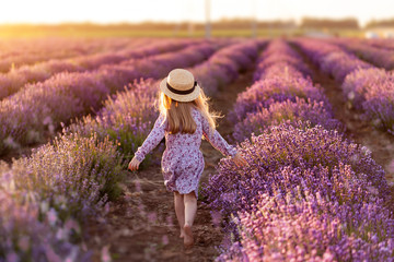 Foto auf Leinwand Hochrote A field of lavender. A little girl go. Rear view.