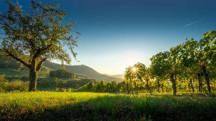 Stores à enrouleur Bleu nuit Blick von Beuren zur Hohenneuffen, schwäbische Alb, idyllische Landschaft mit Weinreben, Sonnenuntergang im Weinberg