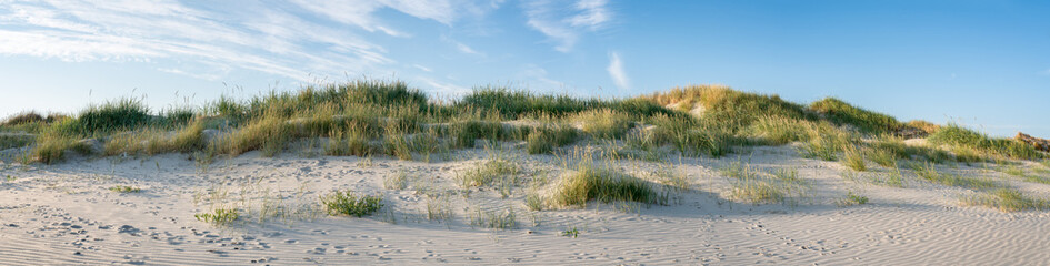 Wall Mural - Sandy dunes as panorama background