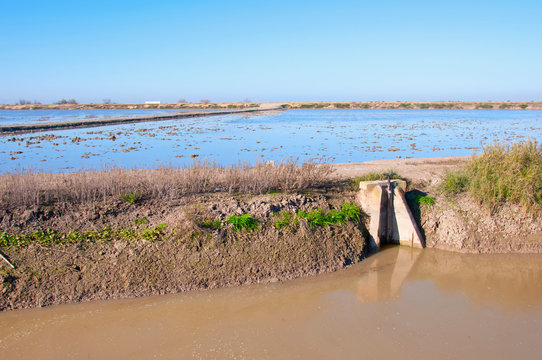 Different ground level between rice fields. Channel with dirty water. Isla Mayor, Seville, Spain