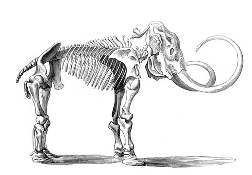 The skeleton of mammoth in the old book Meyers Lexicon, vol. 4, 1897, Leipzig