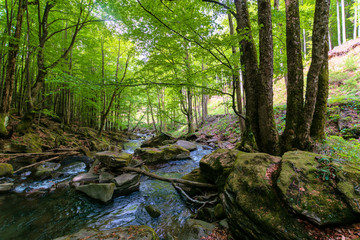 water stream in the beech forest. stunning nature scenery in spring, trees in fresh green foliage. mossy rocks and boulders on the shore. warm sunny weather