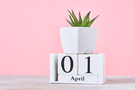 Wooden blocks calendar with date 1st april and plant on the pink background. April fools day concept