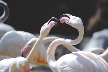 Foto op Canvas Flamingo close up shape pink flamingos.