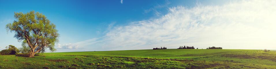 Foto op Canvas Wit Spring landscape