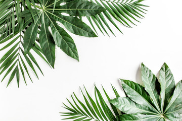 Foto op Canvas Bloemen Tropical palm leaves Aralia isolated on white background. Tropical nature concept.